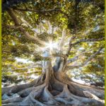 Oxford Conference – The Tree of Knowledge