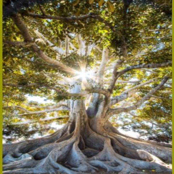 """Oxford Conference – """"The Tree of Knowledge"""" NOW SOLD OUT"""